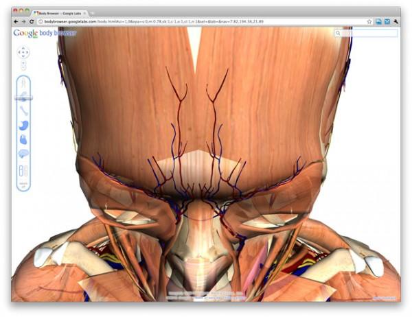 Google выпустила интерактивный путеводитель по человеческому телу