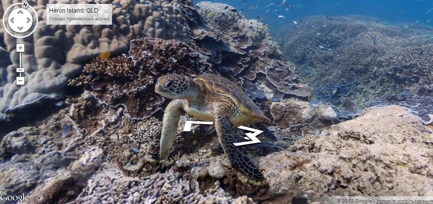 В Google Maps появились первые подводные панорамы